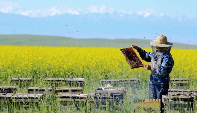 从来没养过蜜蜂该如何养呢?