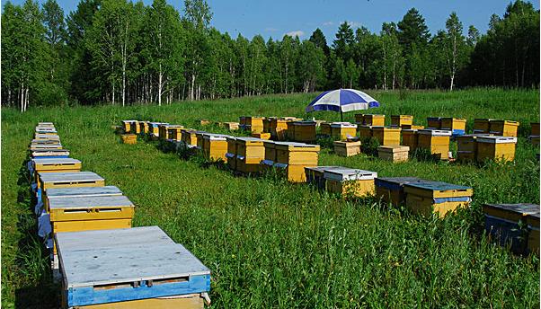 养蜂如何掌握春繁技术呢?