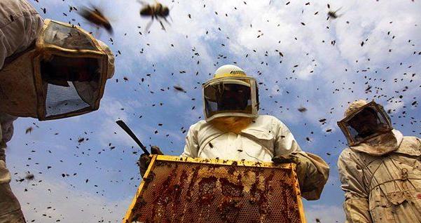 养殖中华蜜蜂要多少钱一箱呢?
