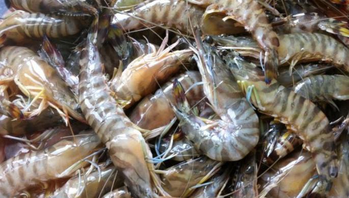 基围虾与南美对虾有什么区别?