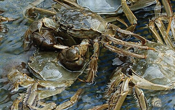 什么季节吃阳澄湖大闸蟹?
