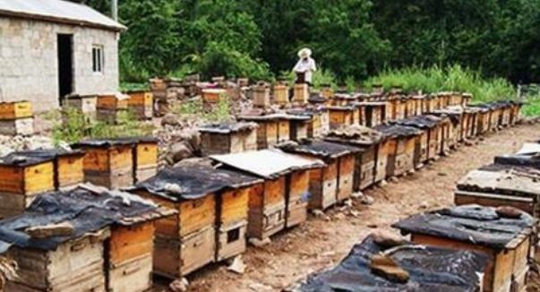 中蜂养殖分箱技术要点?