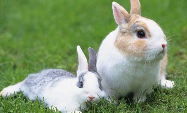 养殖兔子愁销路吗?
