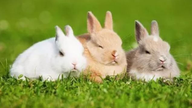 养殖兔子赚钱吗?好养吗?