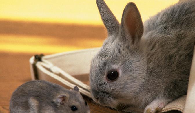 散养兔子养殖技术
