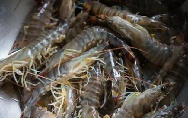 基围虾营养价值及功效