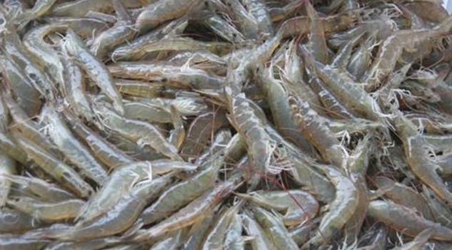 基围虾海白虾哪个价格更贵呢?