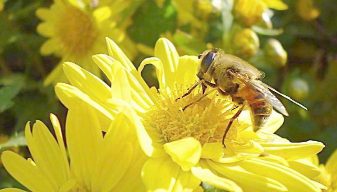 养十箱蜜蜂一年能赚多少钱?