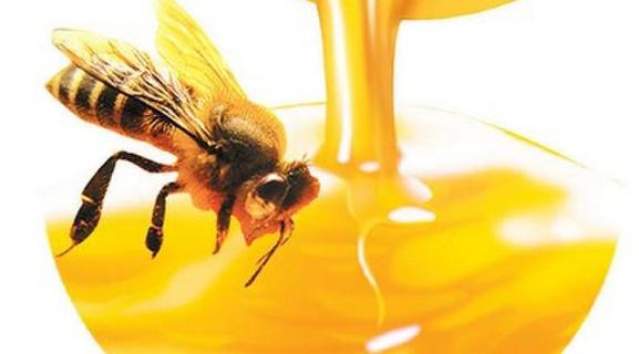 土蜂蜜什么时候喝最好?