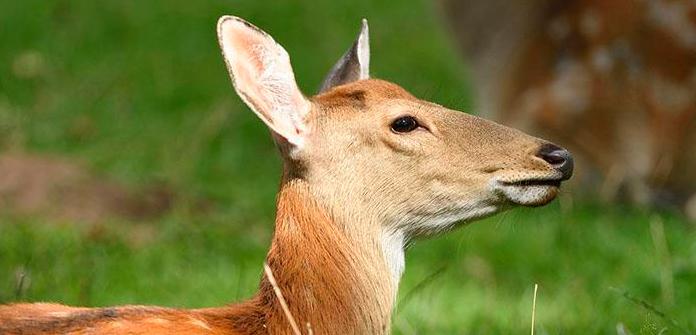 养十头鹿前期要投资多少钱?