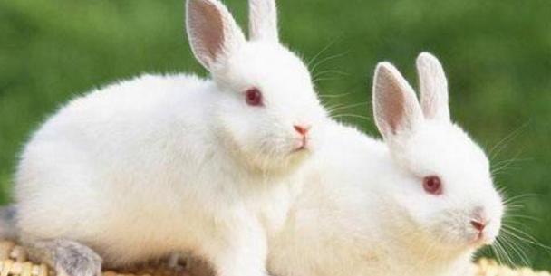 如何选择散养野兔子的场地?