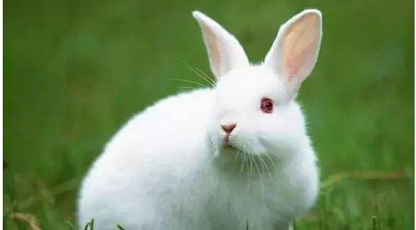 怎么散养野兔?