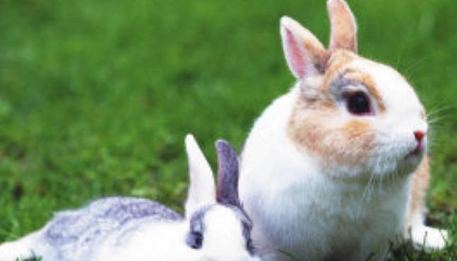 兔子吃什么才能长得快呢?
