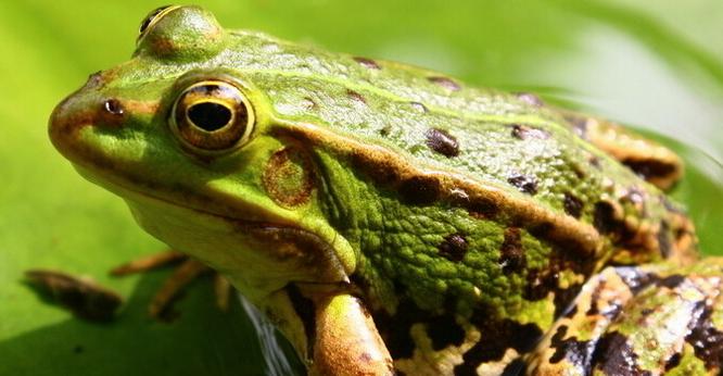 养殖青蛙利润怎么样?