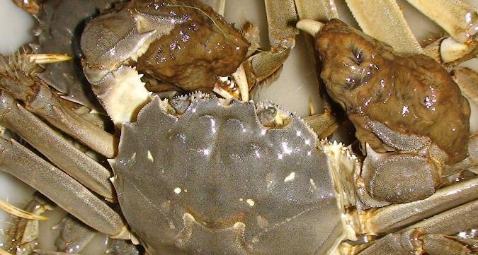 现在阳澄湖大闸蟹的价格多少?