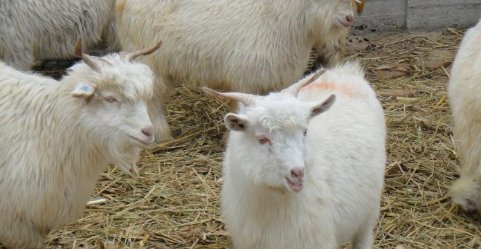 办养羊场能赚钱吗?