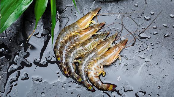 淡水养殖基围虾技术?
