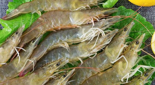基围虾在冬天怎么养殖的?