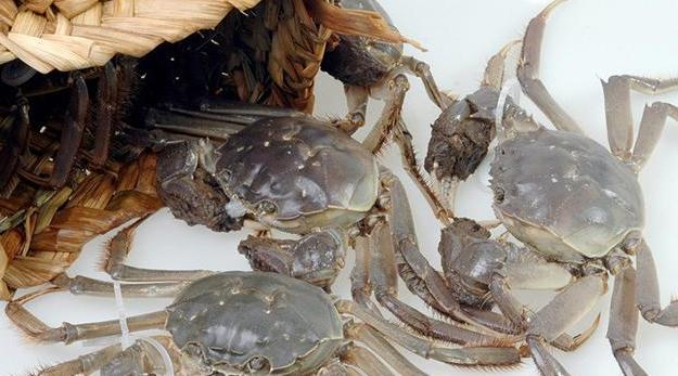 阳澄湖大闸蟹食用季节是多久?