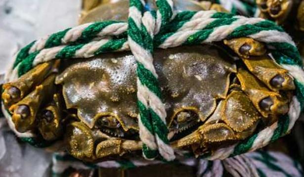 养大闸蟹一年能赚多少钱?