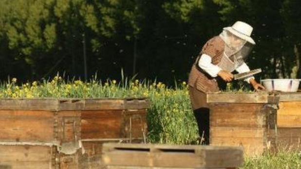中蜂养殖技术小技巧?