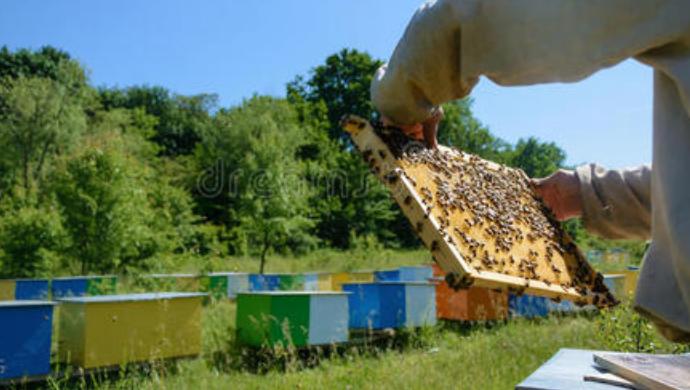 新手用哪种蜂箱养蜂好?