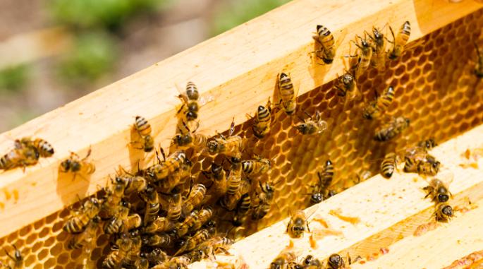 春季人工分蜂的方法?
