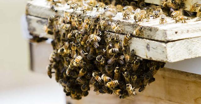 新手养蜂需要那些工具?