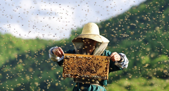 怎么放置蜂箱诱蜂呢?
