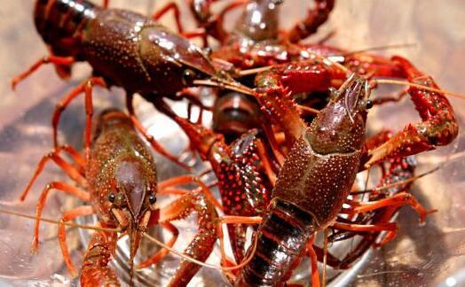 龙虾批发8一10元一斤明年还可以养殖?
