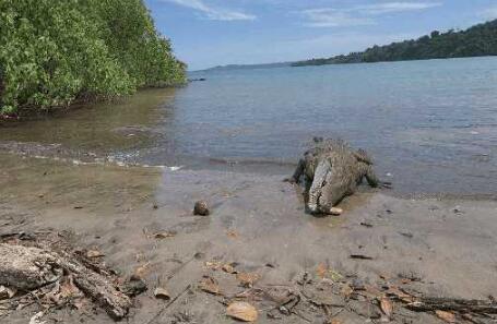 鳄鱼最怕的五种动物主要是哪些?