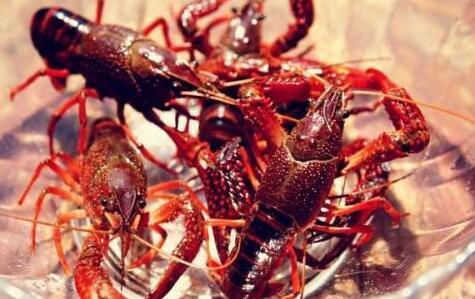小龙虾可以无土养殖吗?