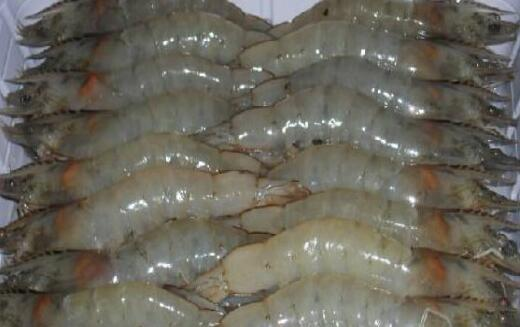 养十亩对虾要多少成本?