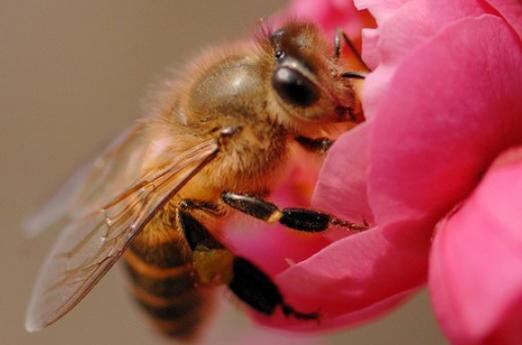蜜蜂养殖成本分析