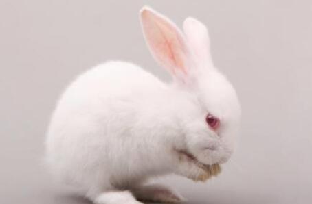现在养50只母兔一年的利润能有多少?