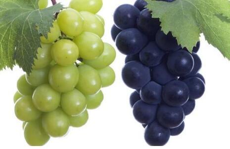 未来5年葡萄种植行情怎么样?