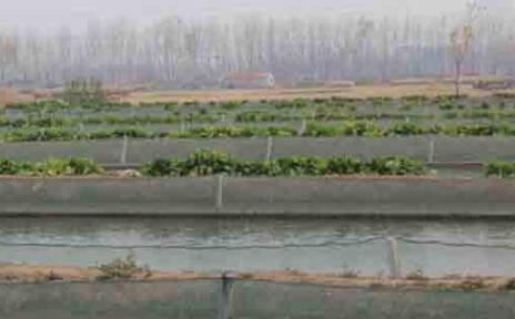 泥鳅养殖成本有哪些?