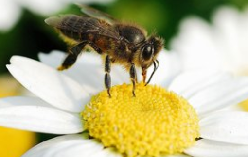 蜜蜂快速繁殖技术有哪些?