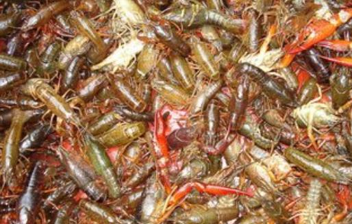 小龙虾池塘爆发青苔要怎么办?