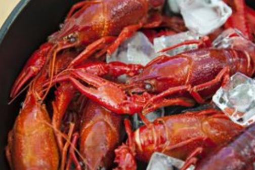 大棚小龙虾养殖技术有哪些?