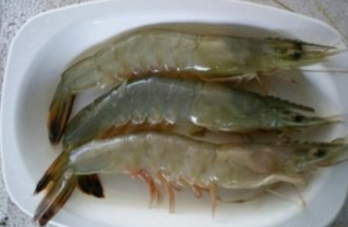 青虾网箱高效养殖技术有哪些