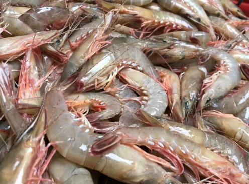 青虾池塘养殖技术分别有哪些