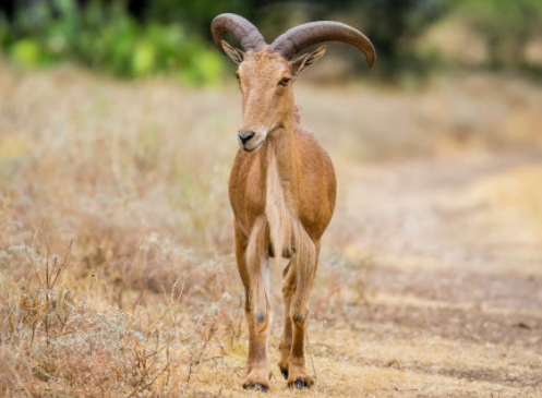 山羊养殖技术分别有哪些?
