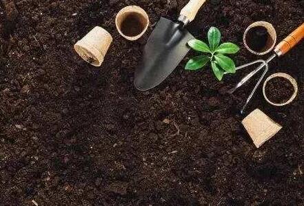 营养土的价格多少钱一斤?