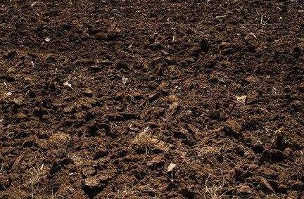 营养土必须掺入自然土?