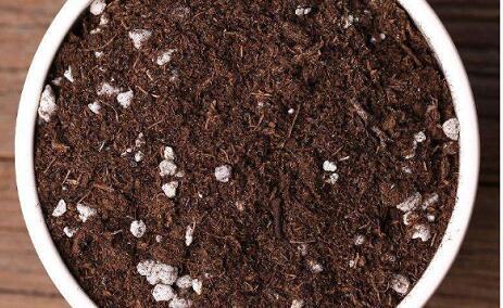 营养土掺土比例多少合适?
