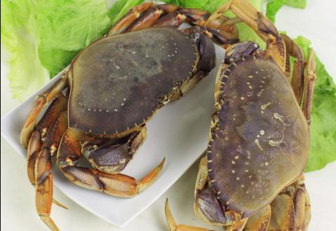 大闸蟹养殖技术有哪些