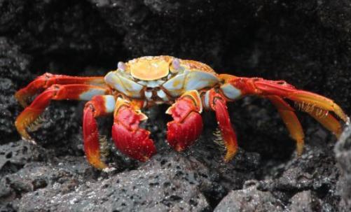 海蟹的种类有哪几种?