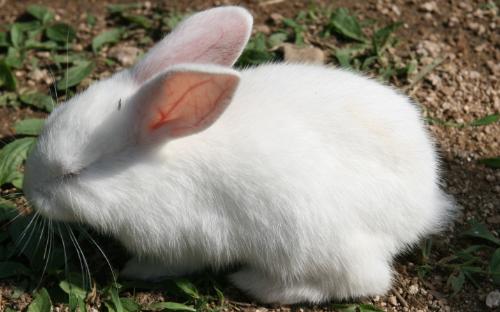 2019年兔子养殖成本与利润分析