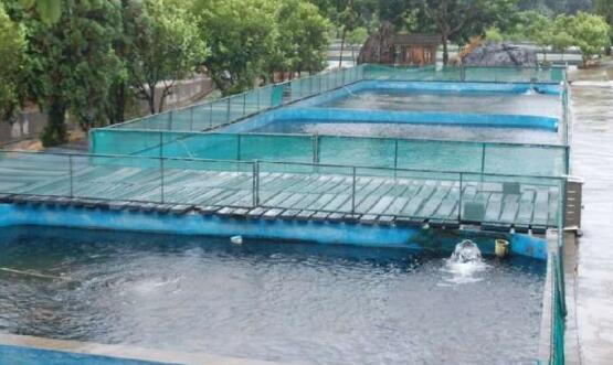 小型锦鲤养殖场要怎么建设?
